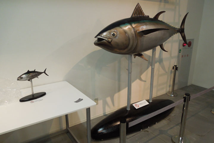 原寸大のマグロの展示模型
